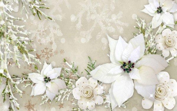 Artistic Flower Flowers White Poinsettia Snowflake HD Wallpaper   Background Image