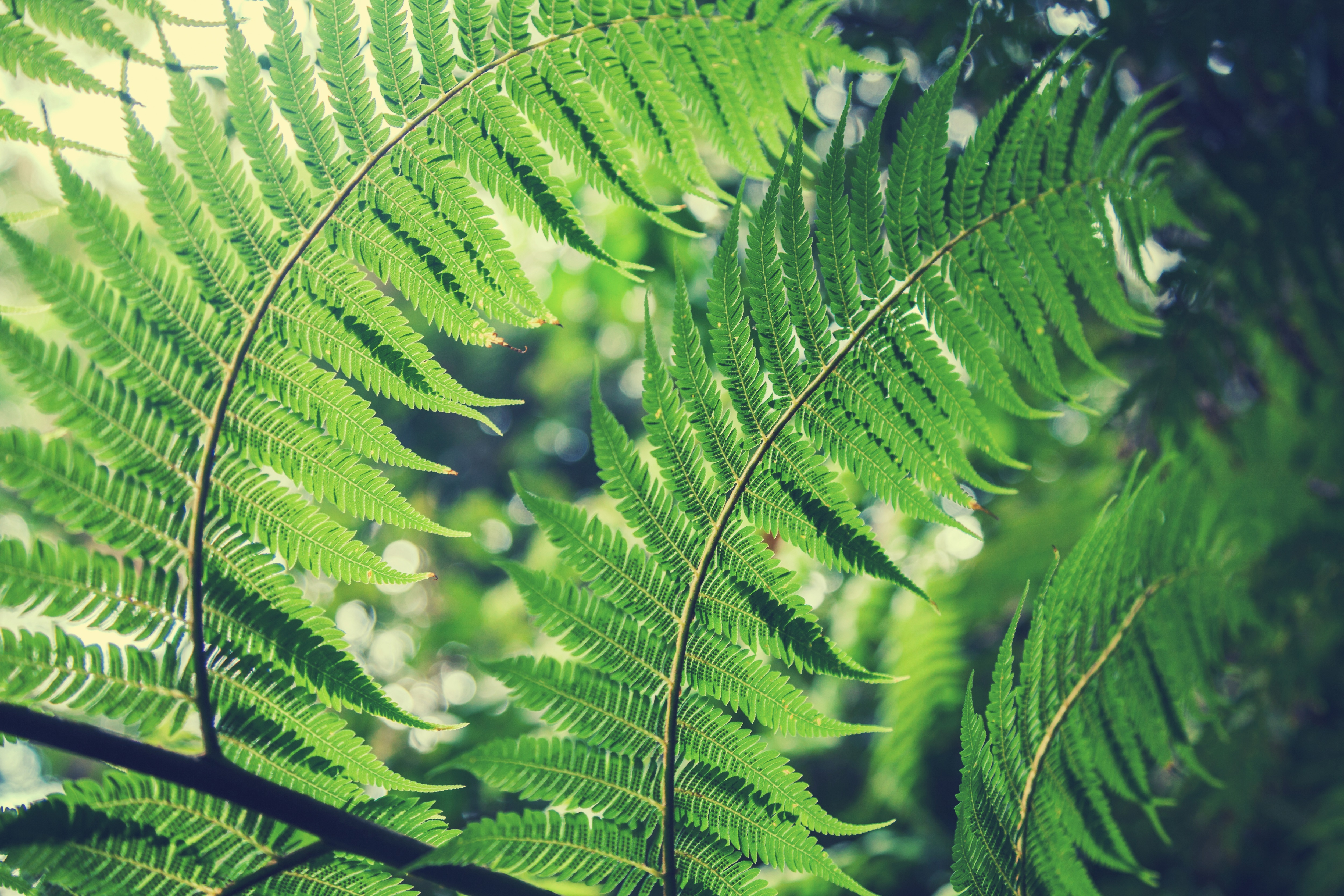 Fern 4k Ultra Hd Wallpaper Background Image 5000x3333