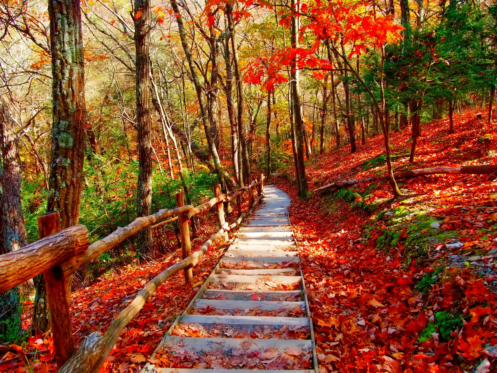 Autumn Forest Path Full HD Wallpaper And Background Image