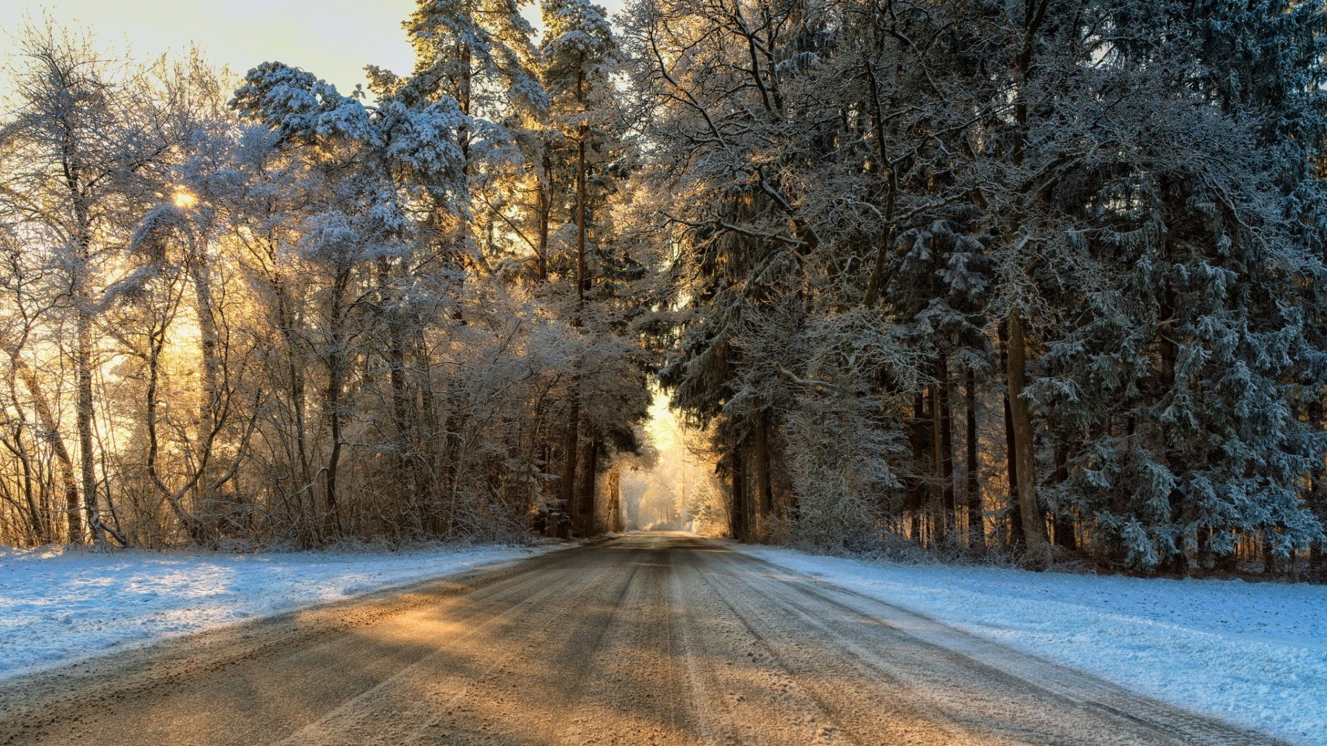 Man Made - Road  Nature Winter Forest Tree Sunny Wallpaper