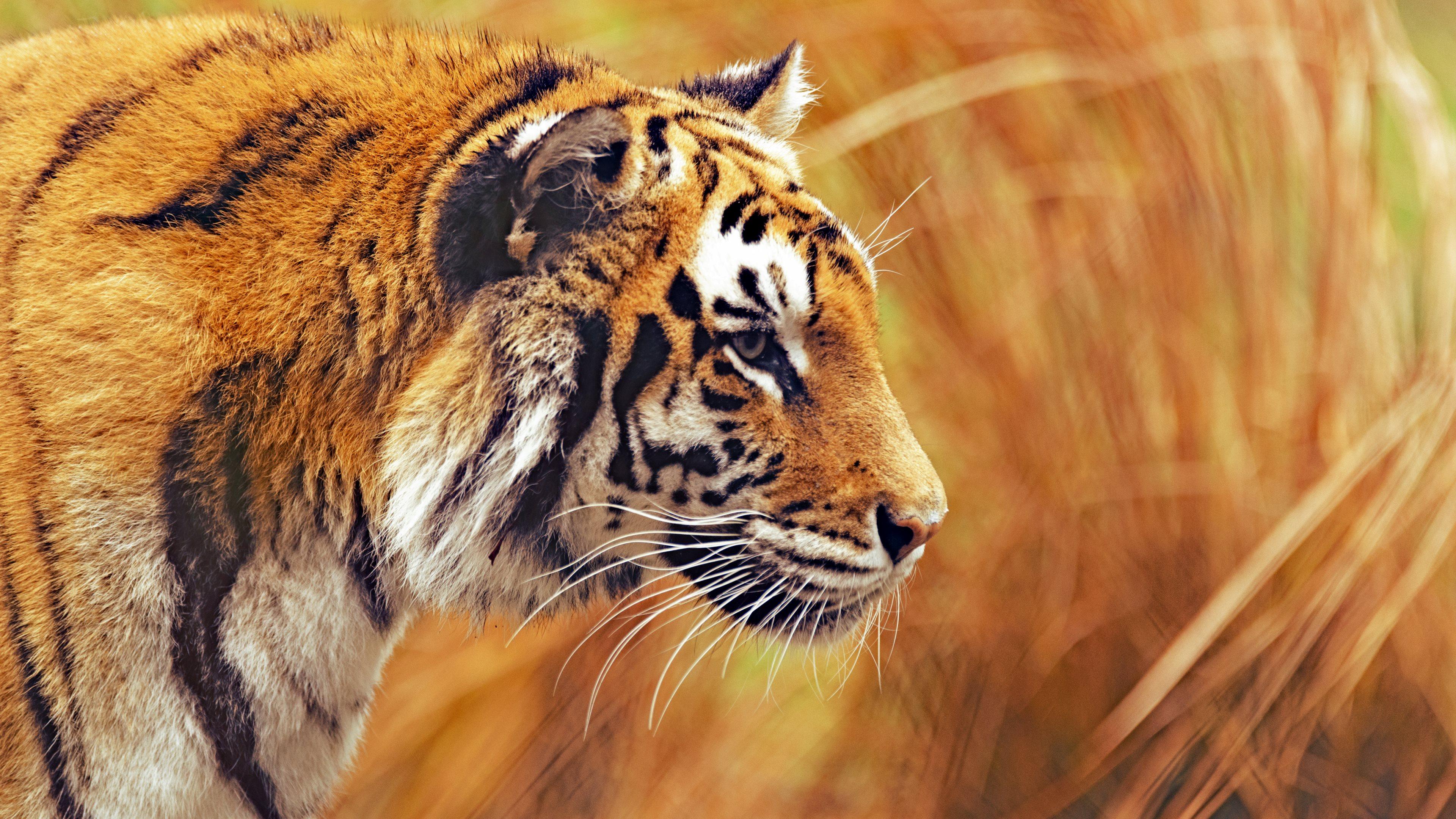 image animaux 4k