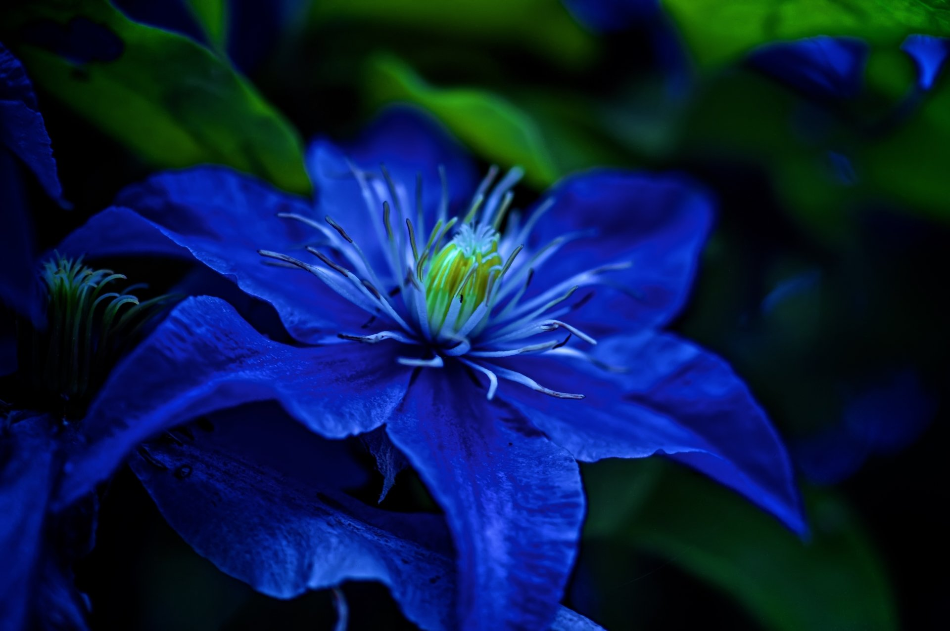 Blue Flower 5k Retina Ultra HD Wallpaper | Background ...