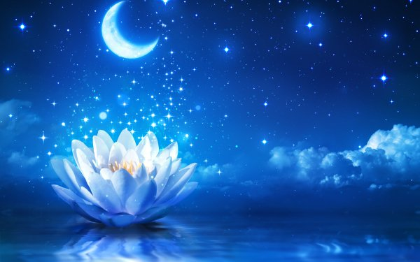 Artistic Flower Flowers Water Lily White Flower Sparkles Night Reflection Moon Stars HD Wallpaper | Background Image
