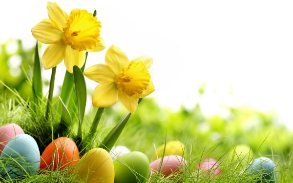 Holiday Easter Daffodil Flower Yellow Flower Easter Egg Grass HD Wallpaper | Background Image