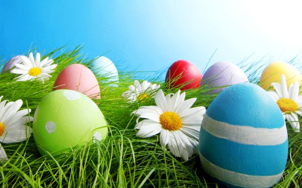 Holiday Easter Easter Egg Grass Colorful Flower HD Wallpaper   Background Image