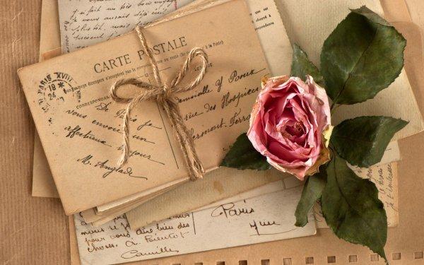 Photography Vintage Letter Postcard Rose Pink Rose HD Wallpaper | Background Image