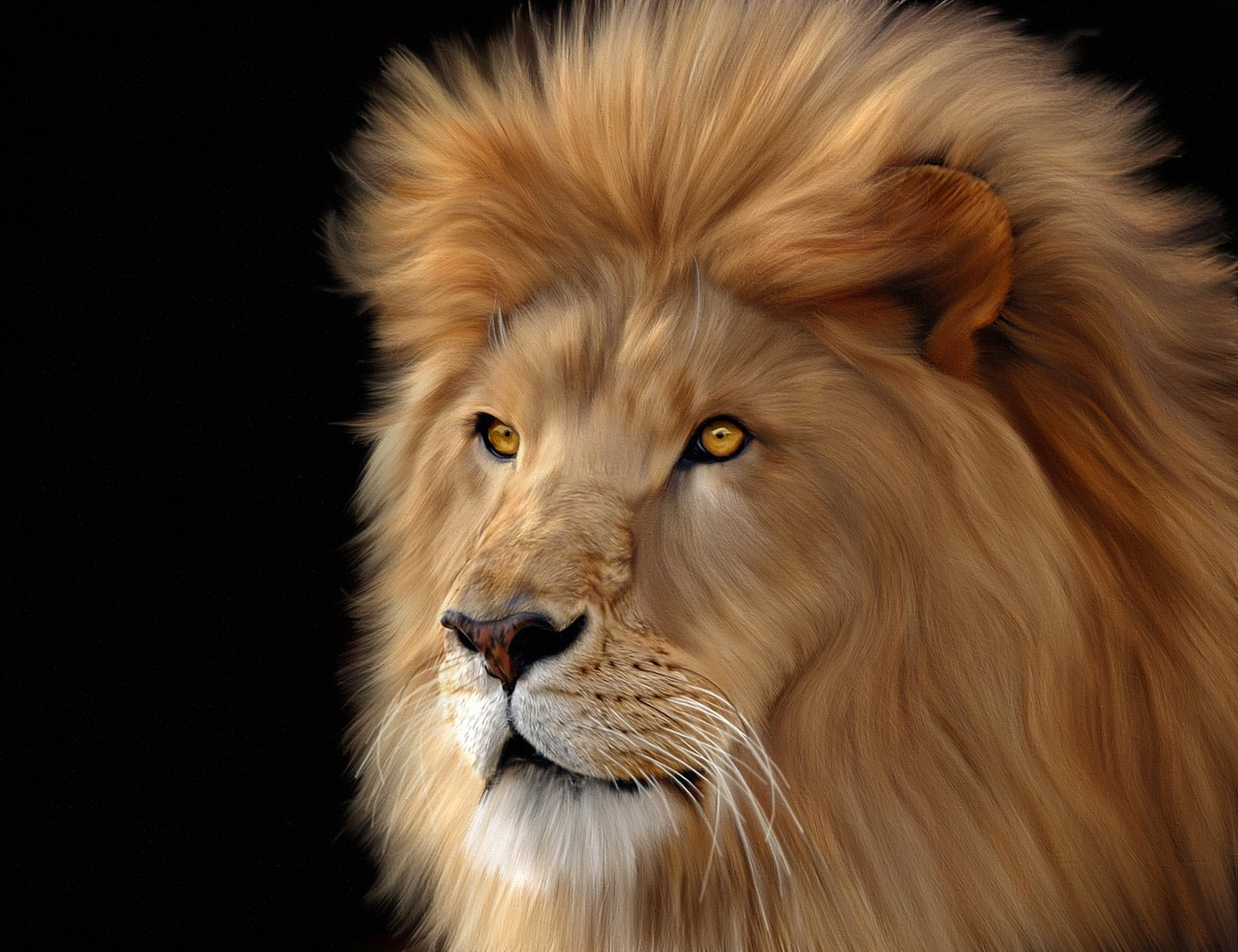 Male Lion HD Wallpaper   Background Image   2070x1592   ID ...