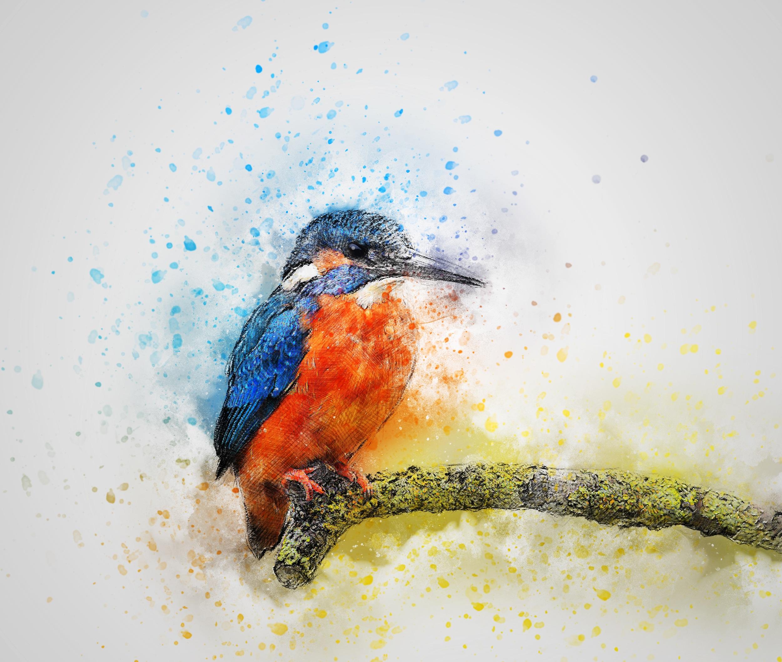 Kingfisher On A Branch Art HD Wallpaper
