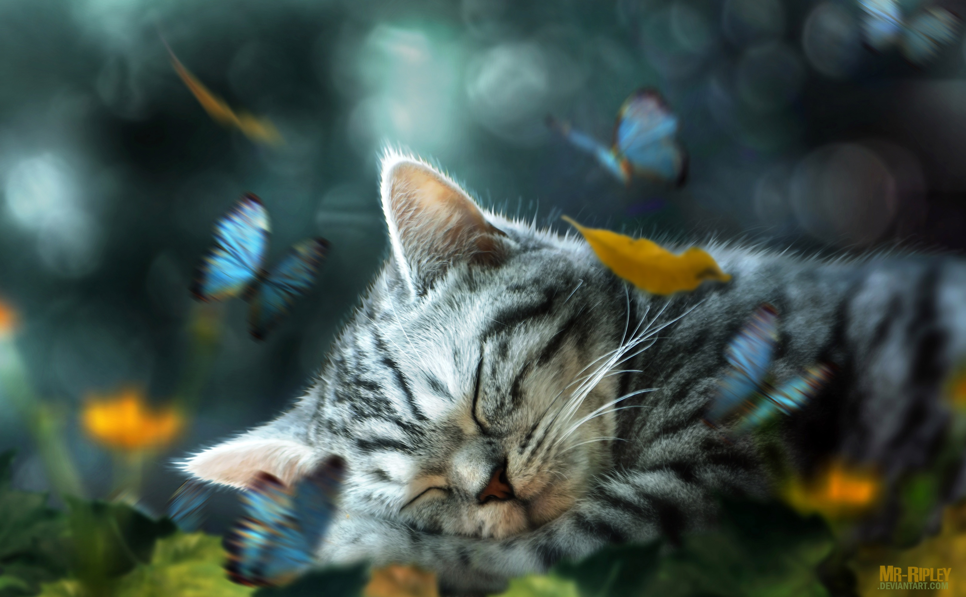Cat Hd Wallpaper Background Image 3236x2000 Id 831688