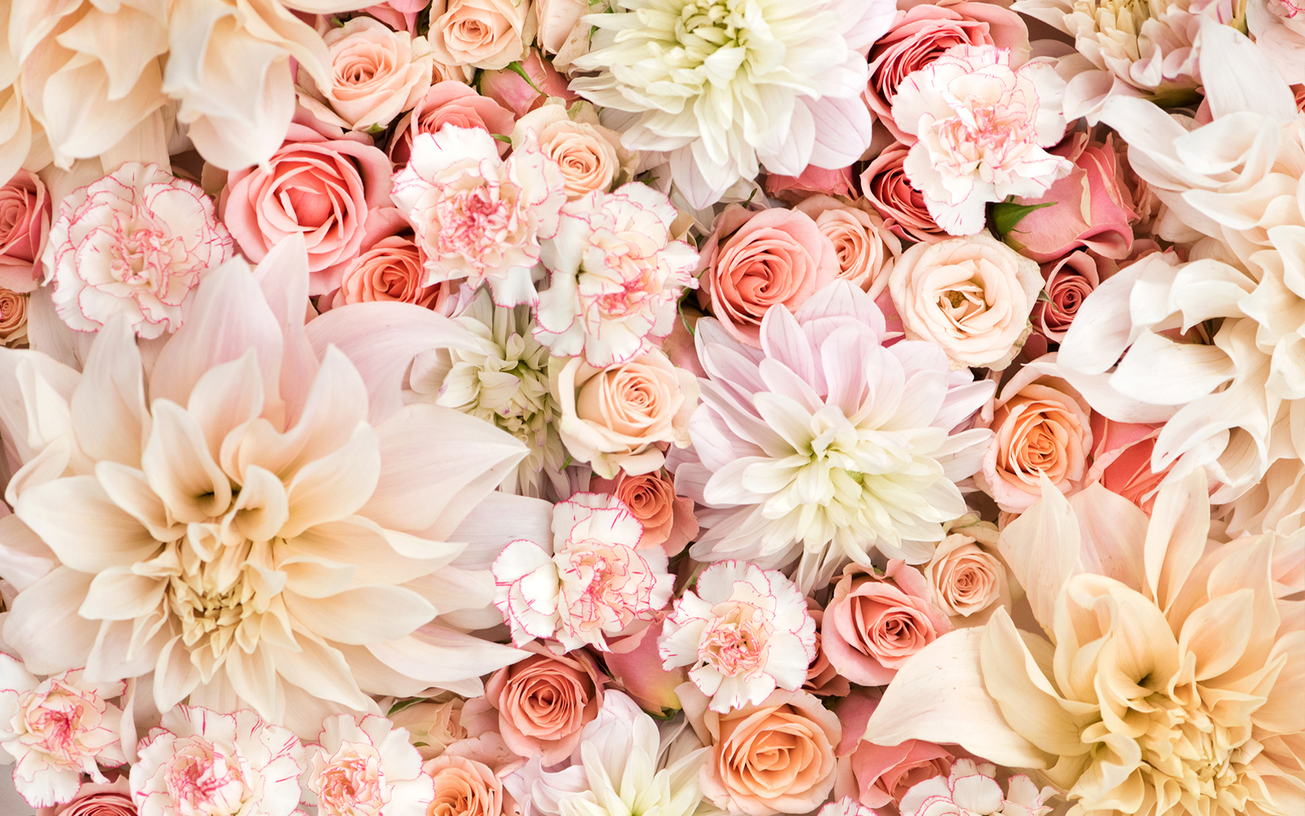 Dahlias, Roses, and Carnations in Pastels Wallpaper and ...
