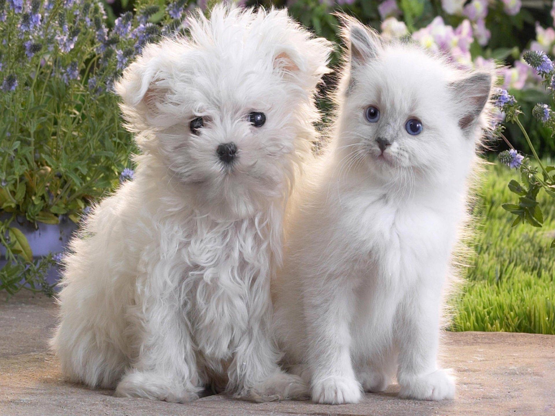 Animal - Cat & Dog  Animal Dog Cat Puppy Kitten White Cute Baby Animal Wallpaper