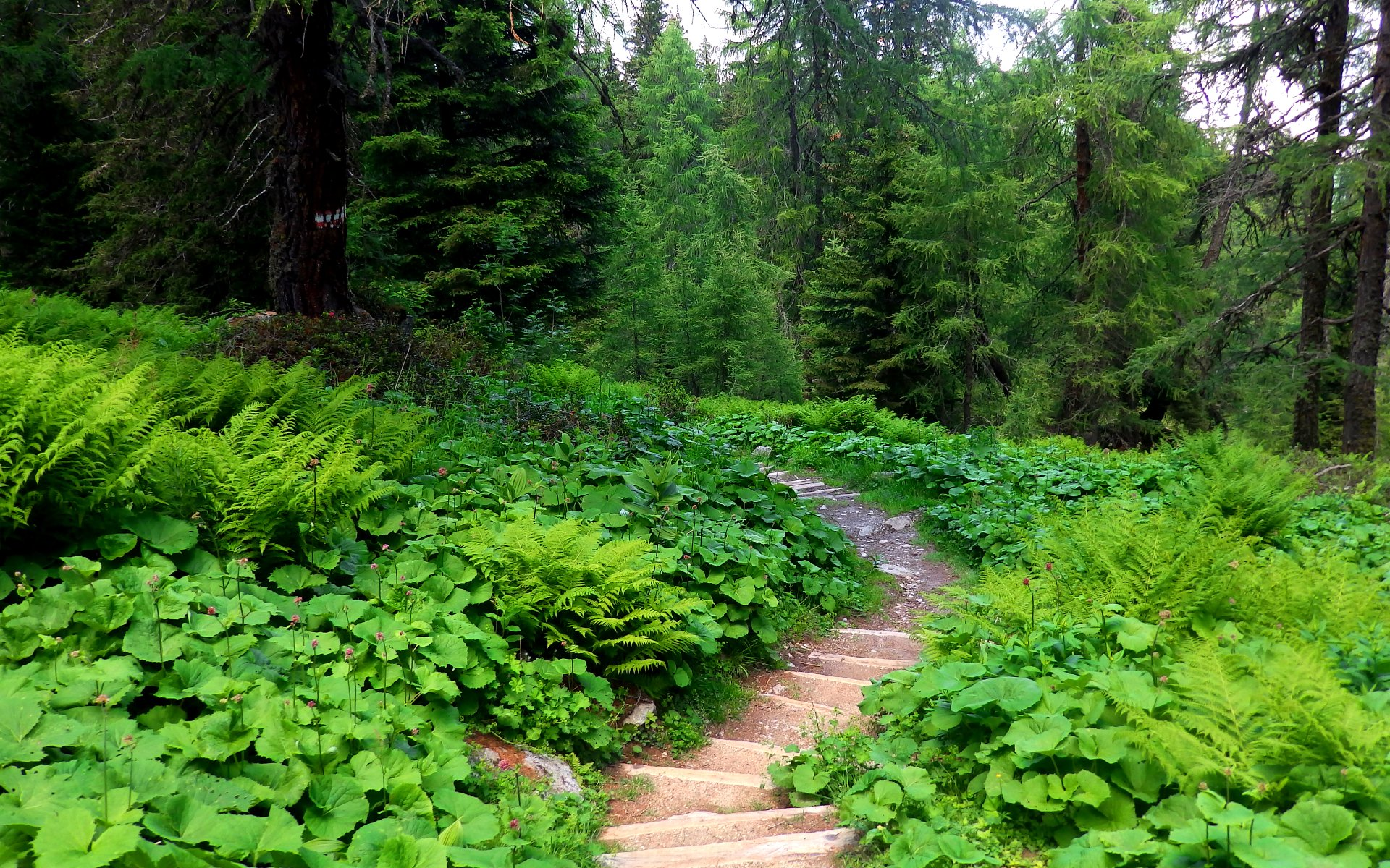 Earth - Path  Earth Nature Forest Vegetation Wallpaper