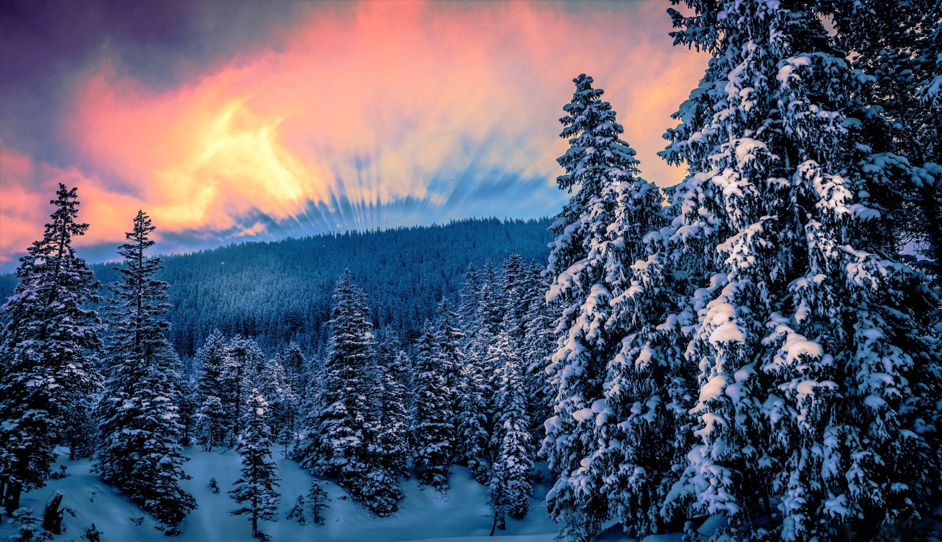 Earth - Winter  Earth Forest Tree Snow Sky Sunset Wallpaper