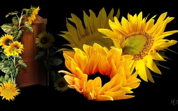 Artístico Flor Flores Girasol Yellow Flower Fondo de pantalla HD | Fondo de Escritorio