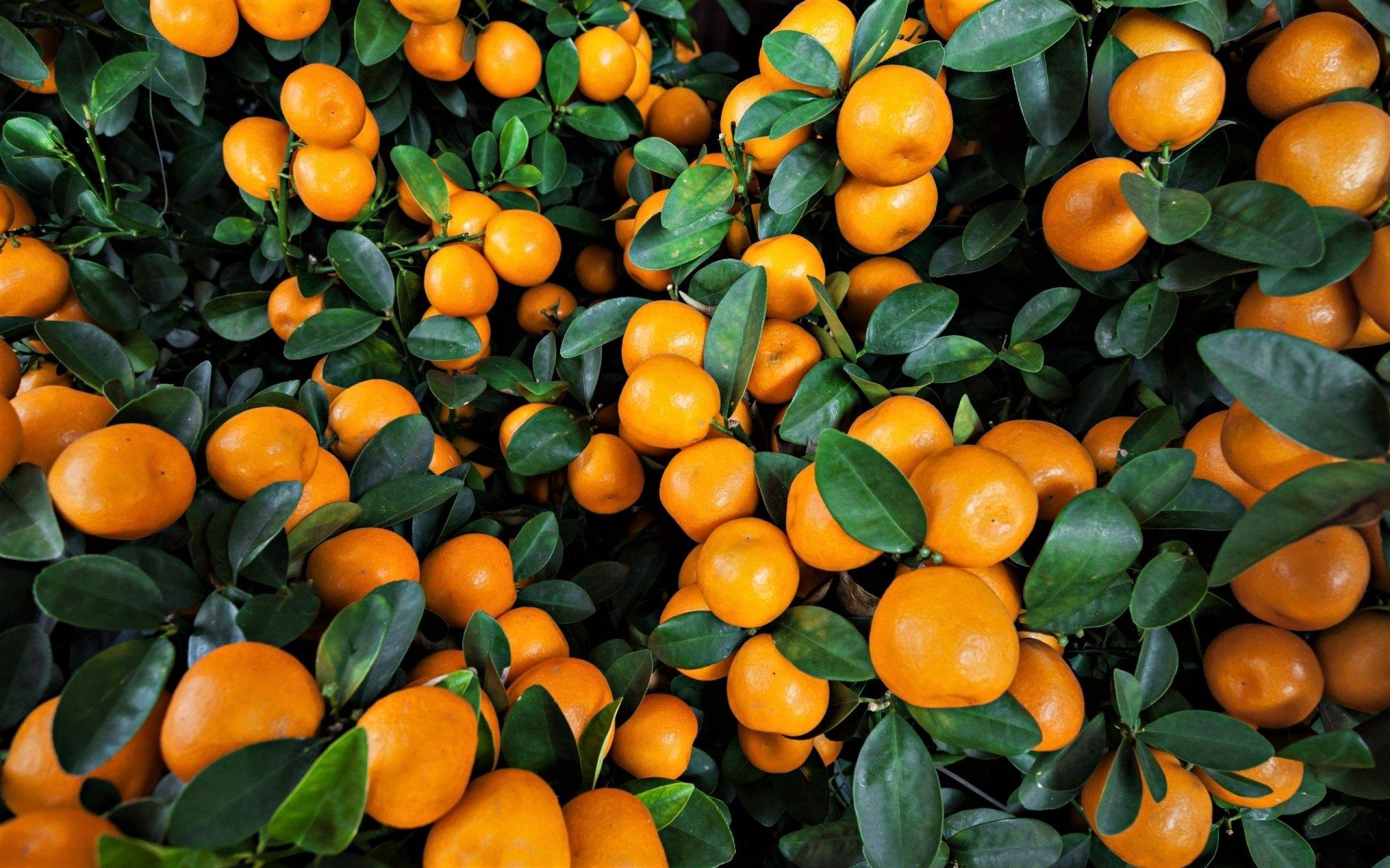 Food - Orange  Food Earth orange (Fruit) Leaf Fruit Wallpaper