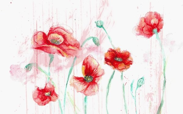 Artistic Flower Flowers Red Flower Watercolor HD Wallpaper | Background Image