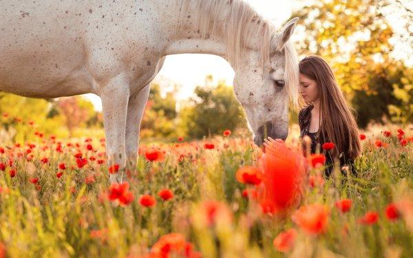Women Mood Model Brunette Depth Of Field Horse Long Hair Summer Poppy Flower Red Flower HD Wallpaper | Background Image