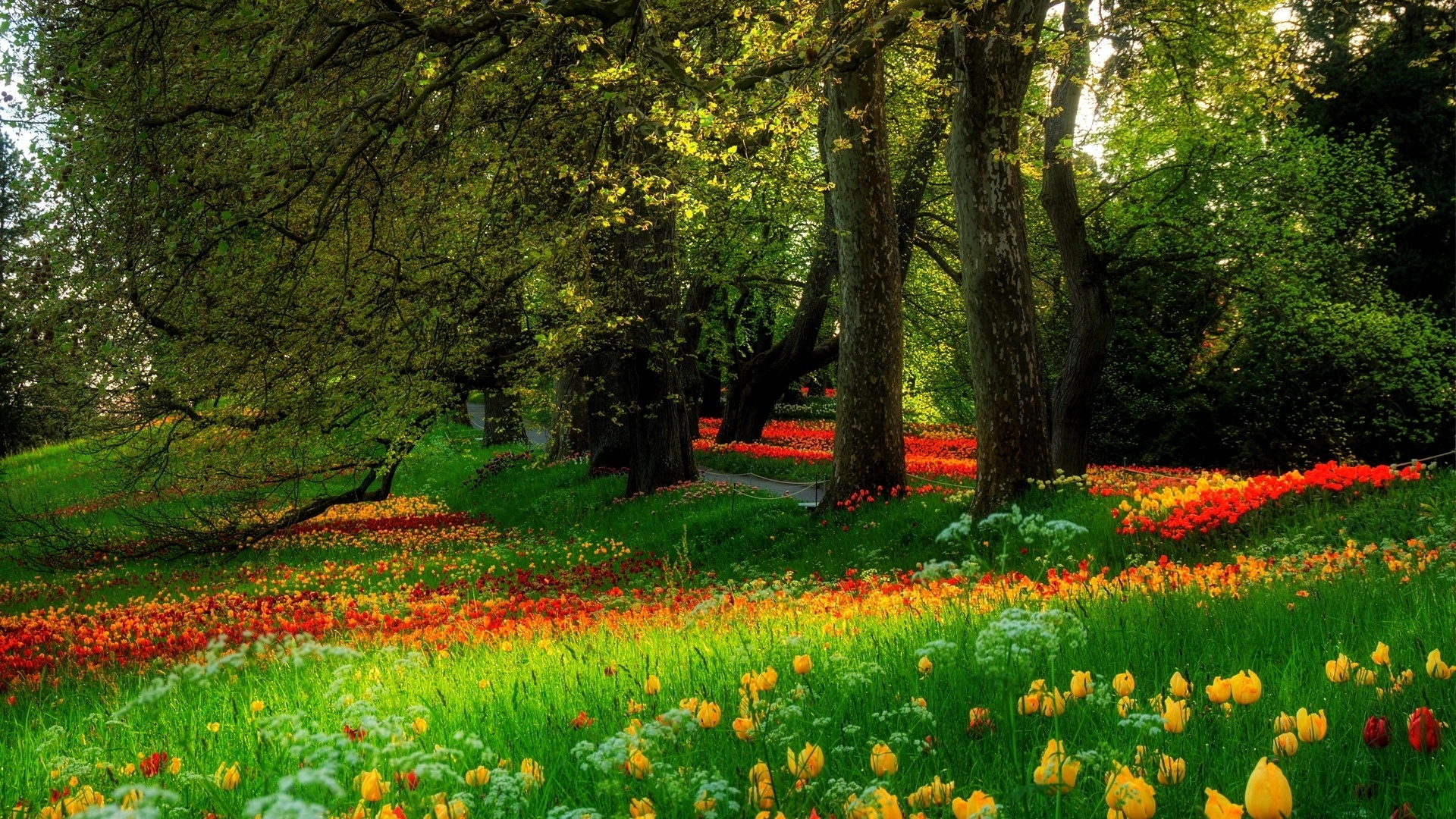 Blooming Flowers in Park Full HD Wallpaper and Background Image ... for Flower Park Background  568zmd