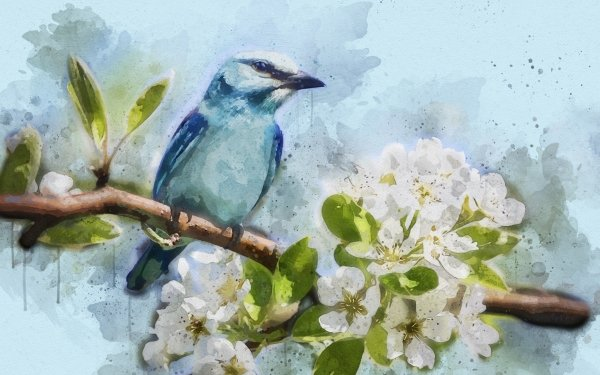 Animal Bird Birds Artistic Watercolor Cherry Blossom Flower HD Wallpaper | Background Image