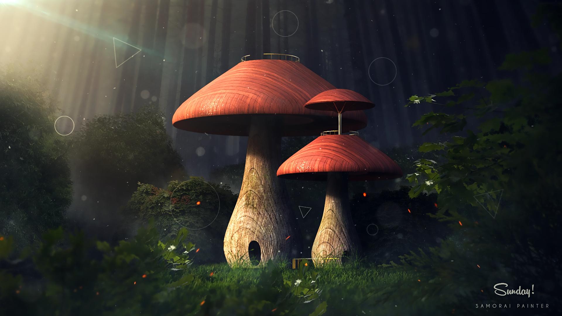 Mushroom Forest Hd Wallpaper Background Image