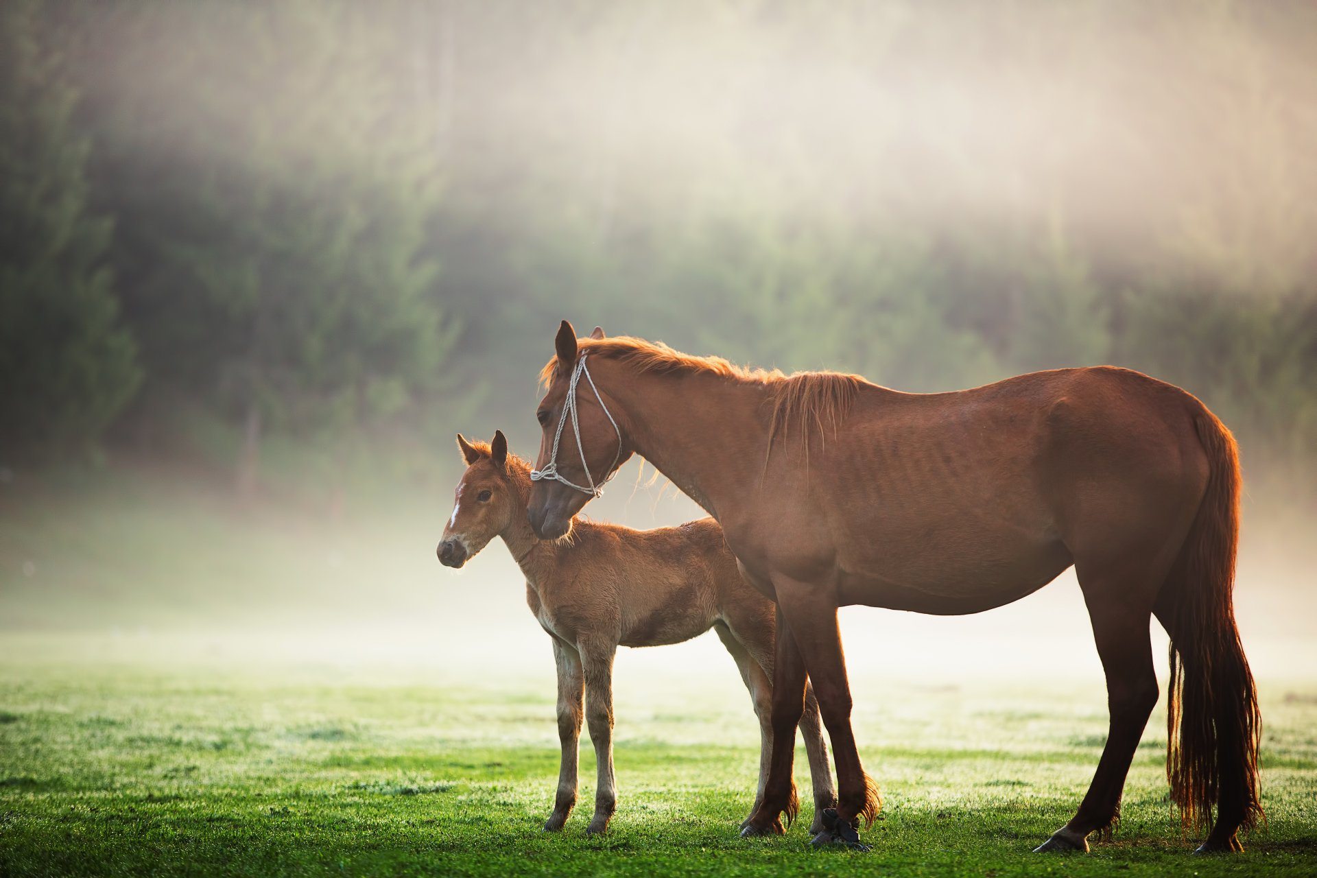 Animal - Horse  Fog Baby Animal Foal Wallpaper