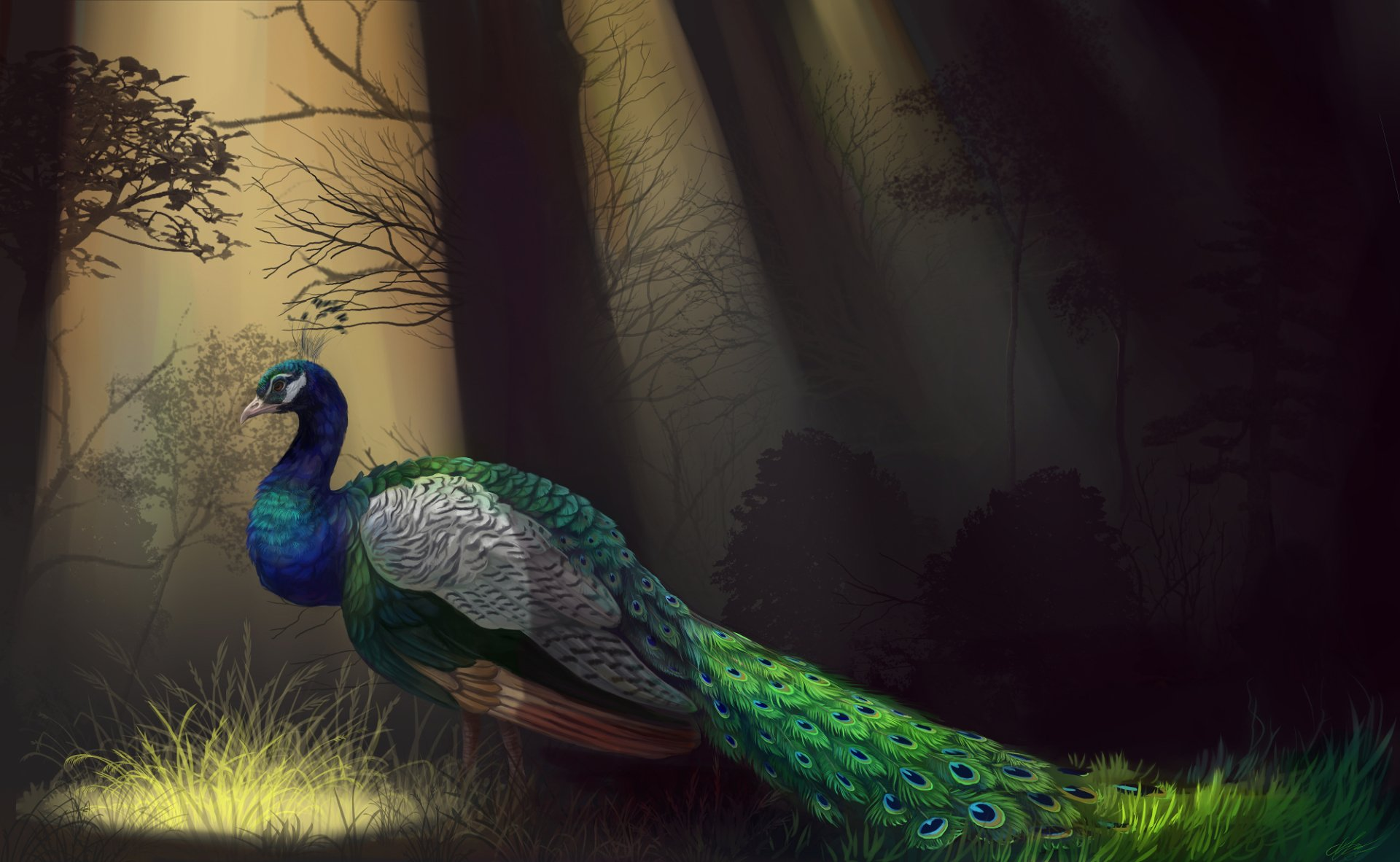 Animal - Peacock  Artistic Painting Bird Colorful Forest Wallpaper