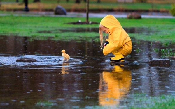 Fotografía Niño Little Girl Raincoat Lluvia Duckling Lindo Reflejo Fondo de pantalla HD | Fondo de Escritorio