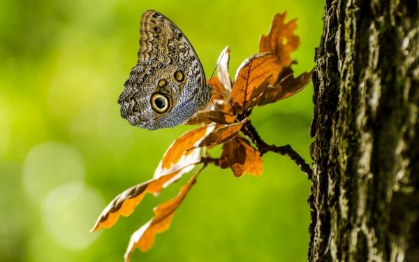 Animal Butterfly Insect HD Wallpaper   Background Image
