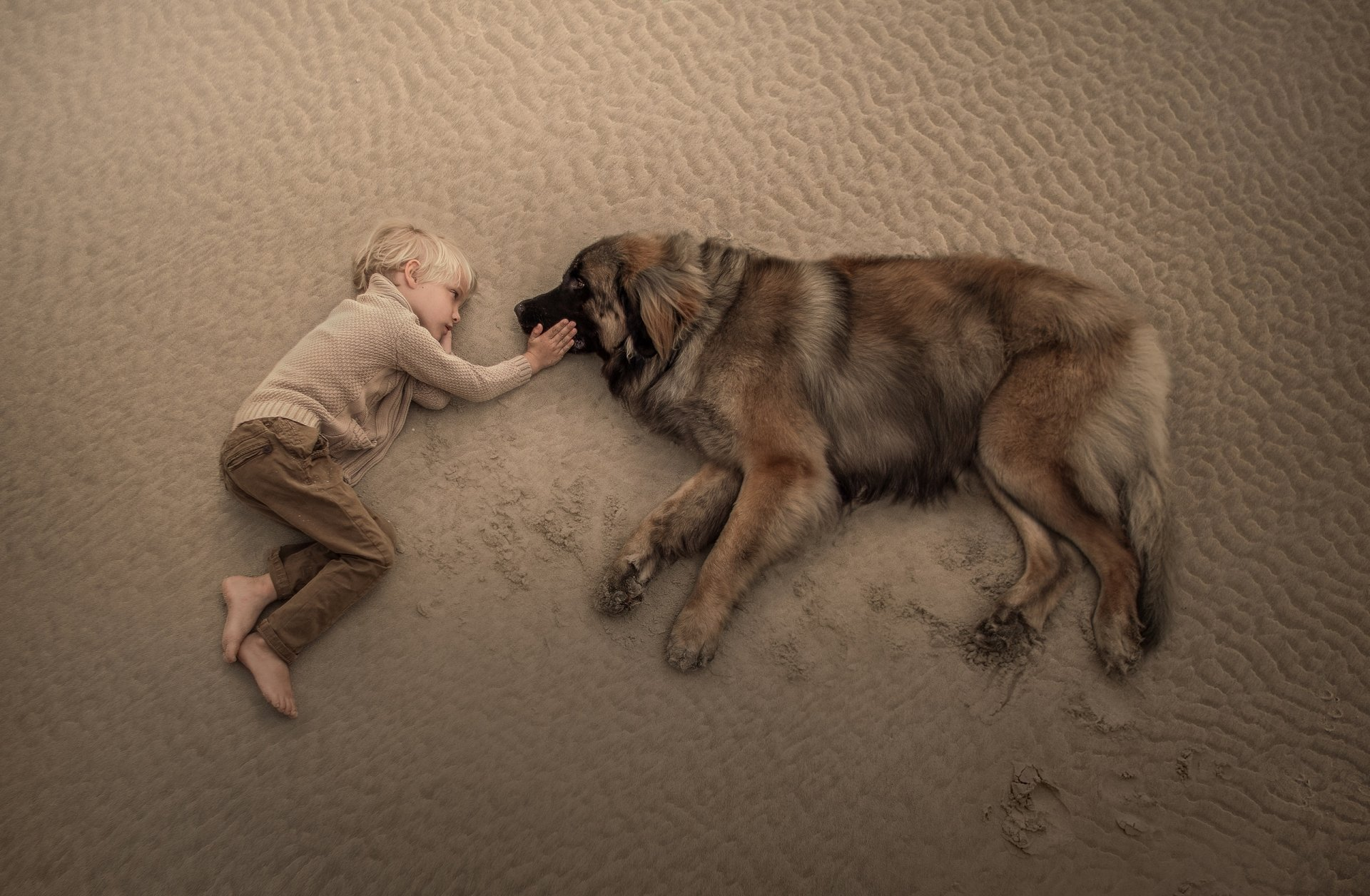 Fotografia - Dzieci  Boy Little Boy Sand Lying Down Pies Leonberger Tapeta