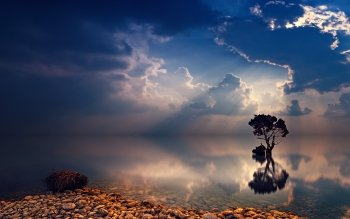 42 4k Ultra Hd Lonely Tree Wallpapers Background Images Wallpaper Abyss