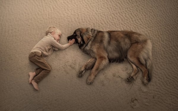 Photography Child Little Boy Sand Lying Down Dog Leonberger HD Wallpaper | Background Image