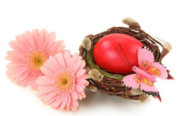 Vacances Pâques Fleur Gerbera Nest Easter Egg Pink Flower Fond d'écran HD | Image