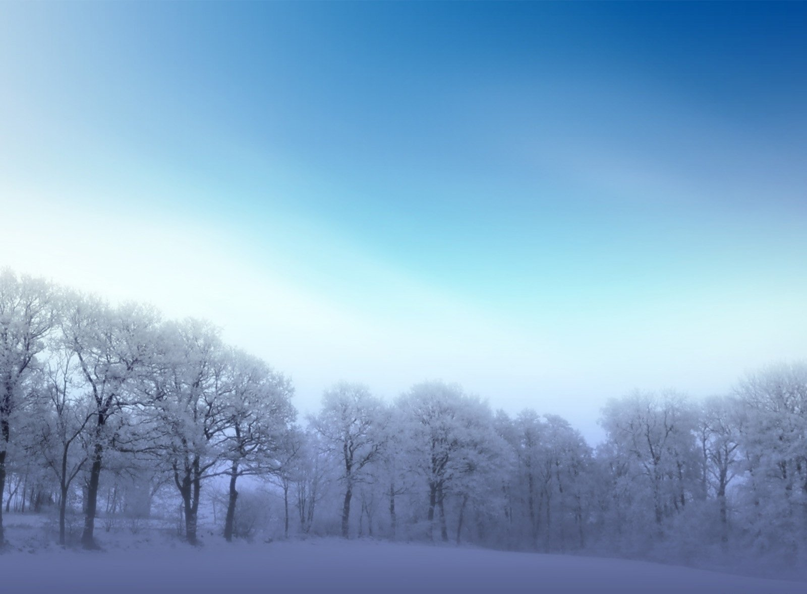 Earth - Winter  Snow Frozen Nature Tree Wallpaper