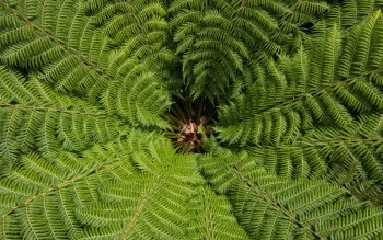 21 4k Ultra Hd Fern Wallpapers Background Images