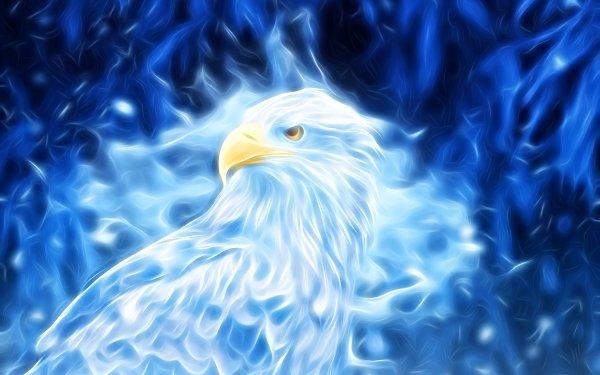 Animal Artistic Digital Art Bird Eagle Blue HD Wallpaper | Background Image