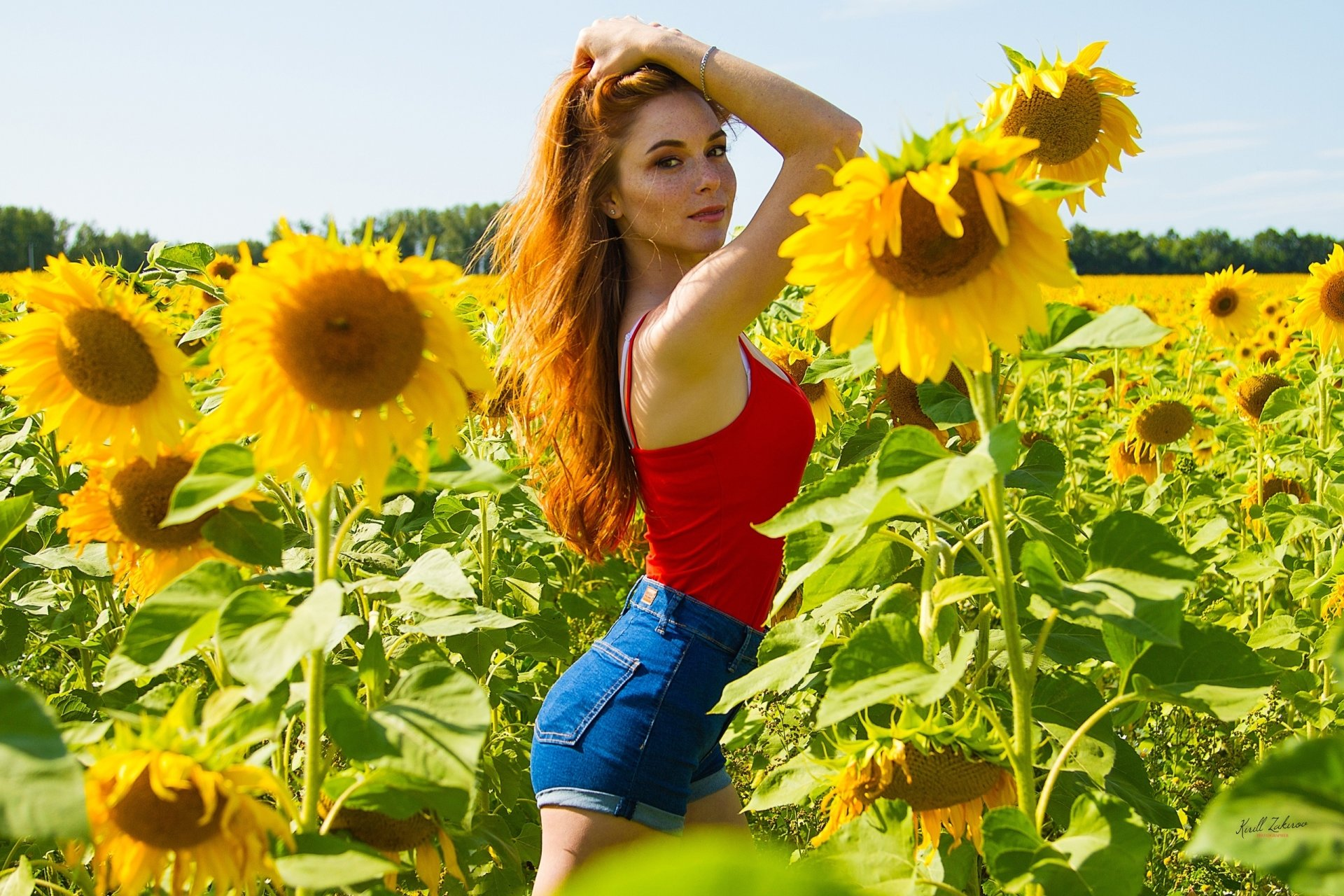 Wallpapers ID:949147