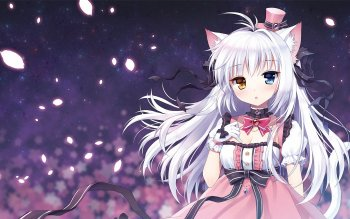 166 Cat Girl Hd Wallpapers Background Images Wallpaper Abyss