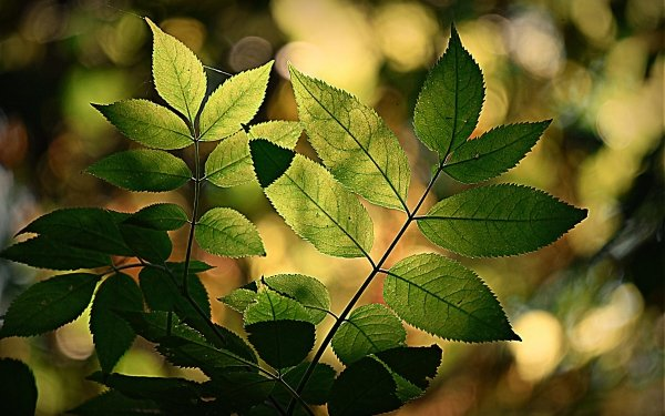 Earth Leaf HD Wallpaper | Background Image