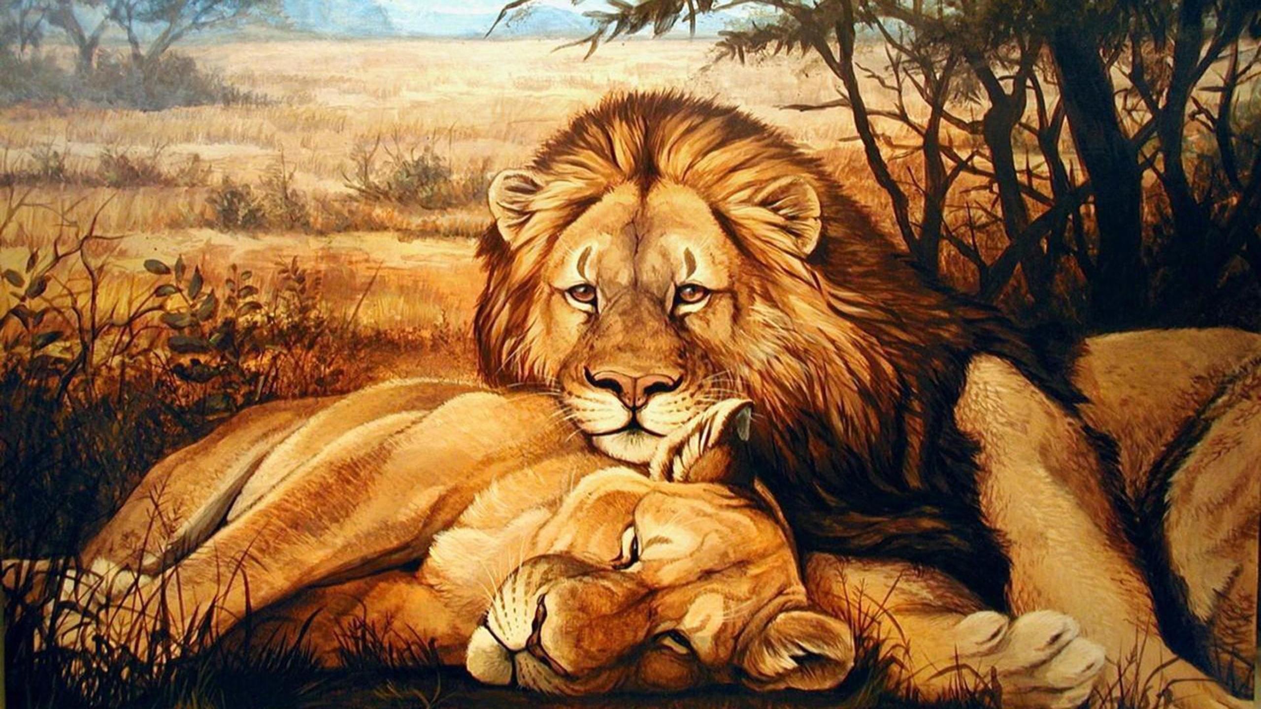 Loving Lion Couple Fond Décran Hd Arrière Plan